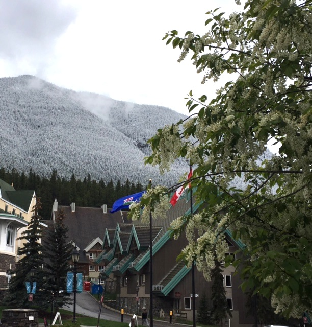 Snow in Banff